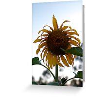 Sad Sunflower Greeting Card