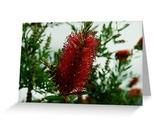 Bottle-Brush Greeting Card
