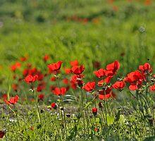 Drops of Reds in Greens by Nira Dabush