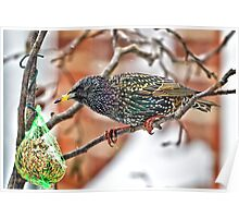 The beauty of a Starling..! Poster