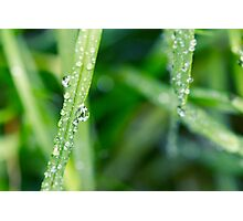 Summer Droplets Photographic Print