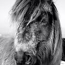 Black Mountain Pony by Victoria Kidgell