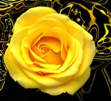 Abstract Rose Macro by glennc70000