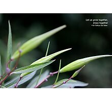Let us grow together... Photographic Print