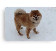 Chico in the snow Canvas Print