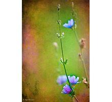 Elegy to a ravishing beauty Photographic Print
