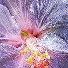 Grey Hibiscus by Beth Mason