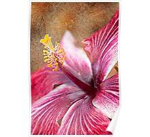 Textured Hibiscus Poster