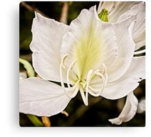 Beautiful butterfly tree Canvas Print