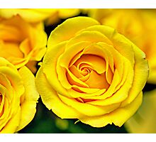 Outstanding Rose - Textured Photographic Print
