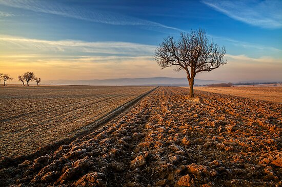 ~Farmtree~ by Delfino