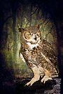 Night Owl by KBritt