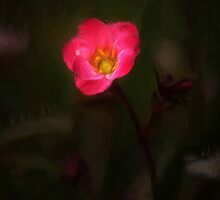 Small Flowe by Matthew Laming