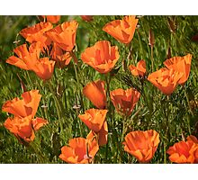 Springtime in California Photographic Print