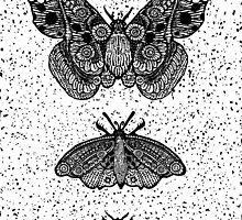 Moths not butterflies by brett66