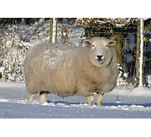 Ewe Looking at Me? Photographic Print