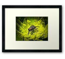 Macro Shot of a Summer Fly Sunbathing on a Yellow Perennial Garden Plant ~ Insect Photography Framed Print