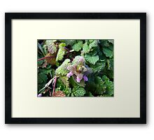Beauty In Weeds 3 Framed Print