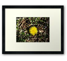 Beauty In Weeds 10 Framed Print