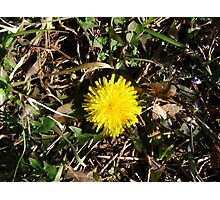 Beauty In Weeds 10 Photographic Print
