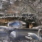 Wintering Swans On Chesterfield Canal - Dedicated to John Dunbar by jules572