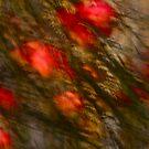Views: 1426 *** Apple tree Abstract. by Andrzej Goszcz.   by © Andrzej Goszcz,M.D. Ph.D
