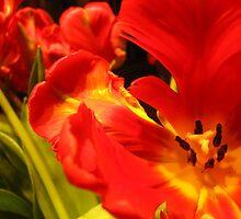 Vibrant Tulips by MonicaDay