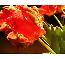 Vibrant Tulips 3 Photographic Print