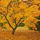 Colours of Autumn by Images Abound | Neil Protheroe