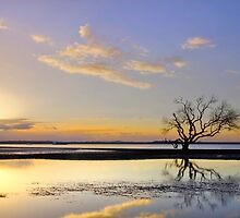 Summer Sunrise - Victoria Pt Qld Australia by Beth  Wode