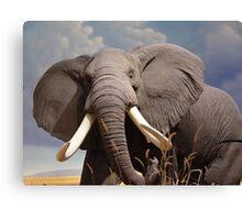 Big Ear Elephant Canvas Print