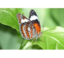 Another Butterfly in Cairns Photographic Print