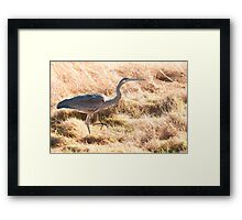 Prancing Along in the Grass Framed Print