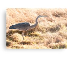 Prancing Along in the Grass Metal Print