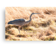 Prancing Along in the Grass Canvas Print