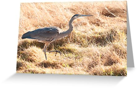 Prancing Along in the Grass by Dale Lockwood