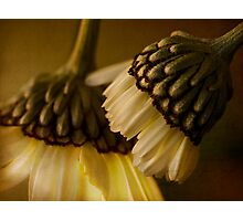 Whispering sweet nothings Photographic Print