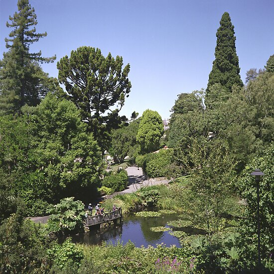 Duck Pond, Botanical Gardens by Derwent-01