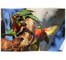 Down The Lorikeet Hole Poster