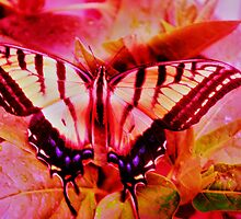 Psychedelic Swallowtail Butterfly by Marsha Ambrose