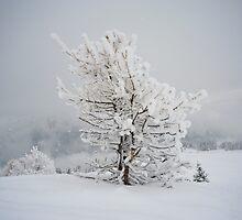 Small Mountain Tree in Snow - landscape by Crispel