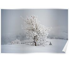 Small Mountain Tree in Snow - landscape Poster