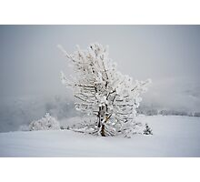 Small Mountain Tree in Snow - landscape Photographic Print