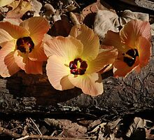 Tryptic of australian flowers by caratilson