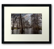 Forest wetlands Framed Print