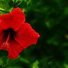 Hibiscus in the Park  by Infinipix