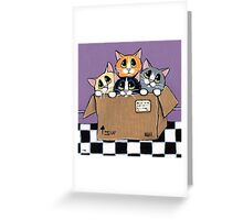Mail Order Kittens Greeting Card