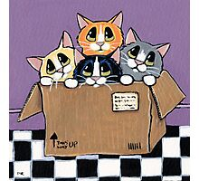 Mail Order Kittens Photographic Print