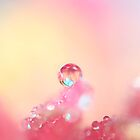 Candy Pink by Sharon Johnstone