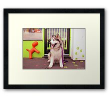 Paws - Katie outside the pet shop Framed Print